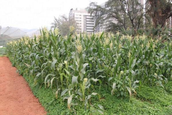 有機種植區內種植了多種時令蔬果,參與除草、翻土和收割等工作,能令人有煥然一新的感覺。
