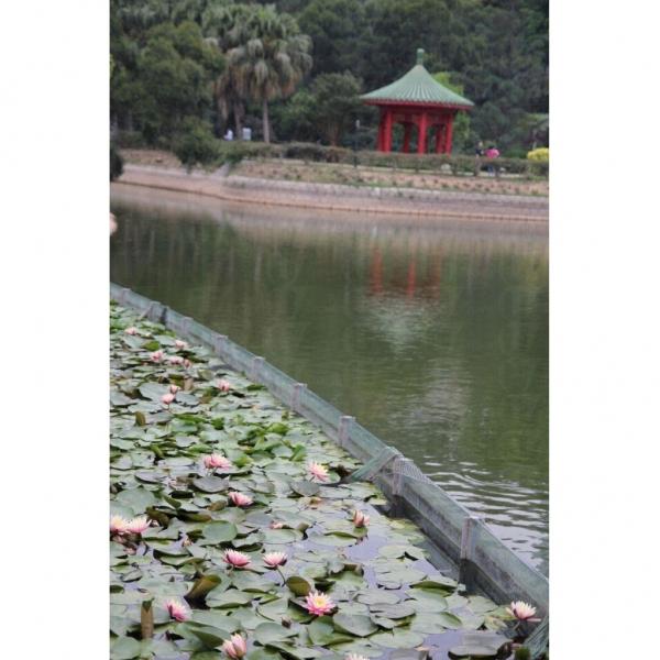 蓮花池和獅子亭互相輝映,彷如古代園林一樣,別具感覺。