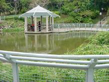 元朗公園設有中國式湖心亭。