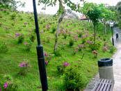 此為杜鵑園。