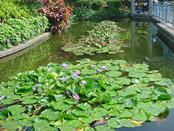 元朗公園的上水池。