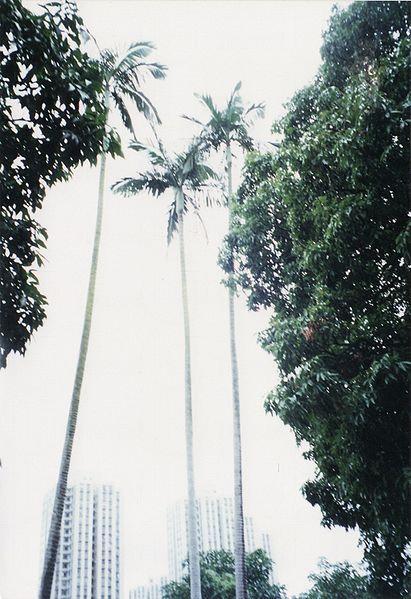 桄榔樹是由黃興及孫中山親手種植,象徵同志一心支持國民革命。
