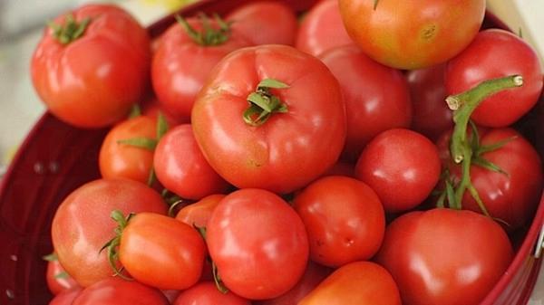 農場不斷引入適合在香港耕種的海外蔬菜,如歐洲承傳的蕃茄。