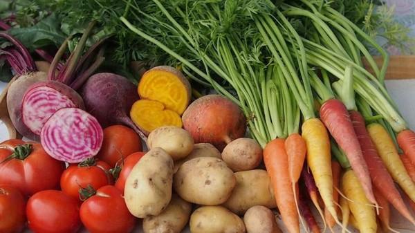 各式各樣的有機蔬果。