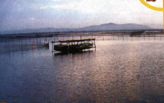 上海鴻福號有自設養殖場。