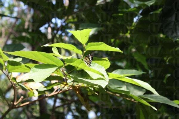 家樂徑上常有蝴蝶飛舞,動植物種類繁多。(陸嘉鈴攝)