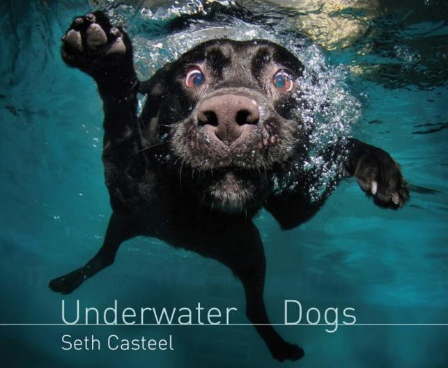 水底下的狗狗 千奇百趣