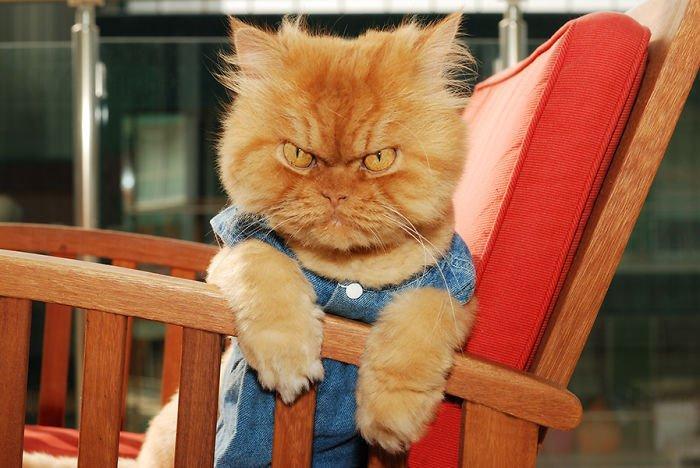 全世界最「生氣」貓貓