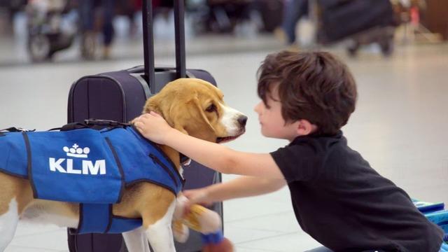 荷蘭機場「Lost & Found」神犬 幫物件找主人