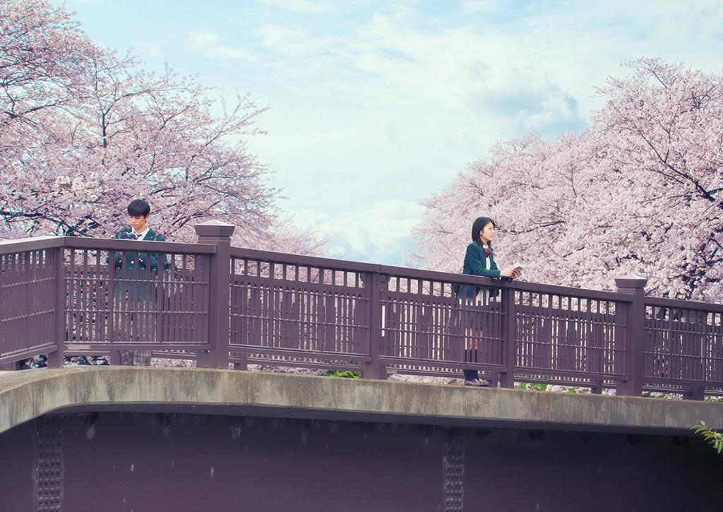 日本票房破30億!感人電影《我想吃掉你的胰臟》香港11月上映