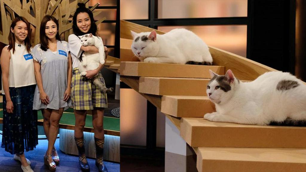 【晚吹–喵喵喵】ViuTV新節目分享養貓心得知識!港台貓界KOL一齊分享貓咪趣聞