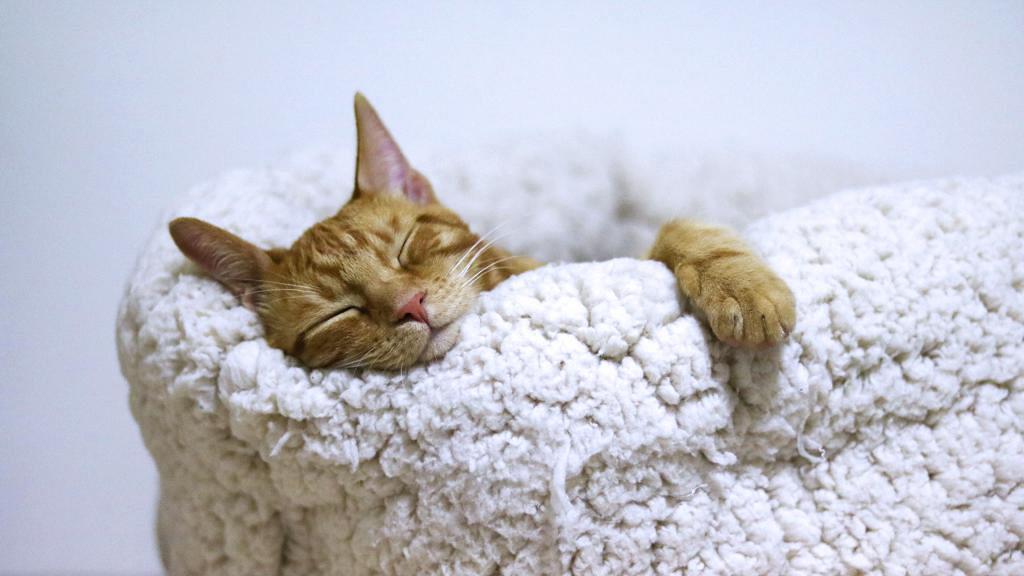 瞓得少個樣真係會嚇走人!研究:睡眠不足會變得更令人討厭