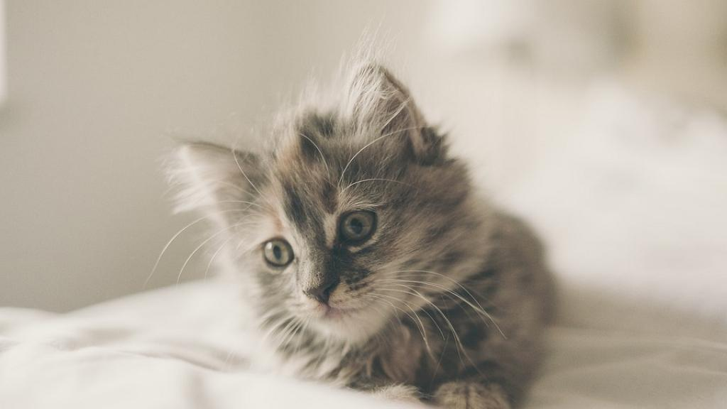女友嫌養貓細菌多迫男友棄養 男方二選一揀貓兼霸氣分手:牠是我的女兒