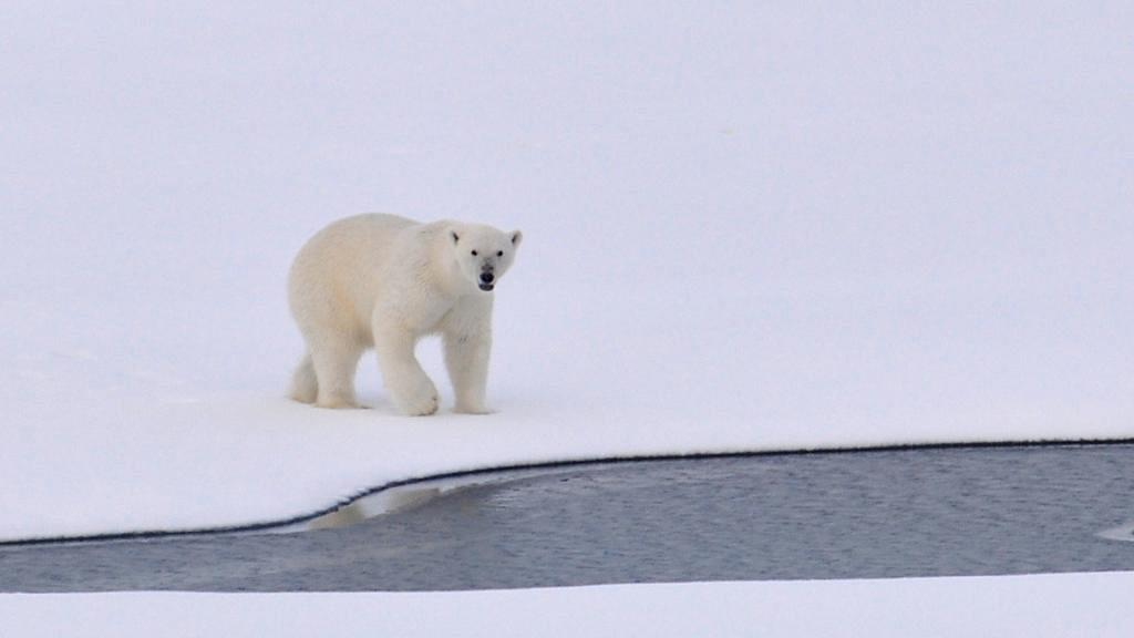 全球暖化北極海氣溫高達29度 二氧化碳濃度達到人類歷史最高水平