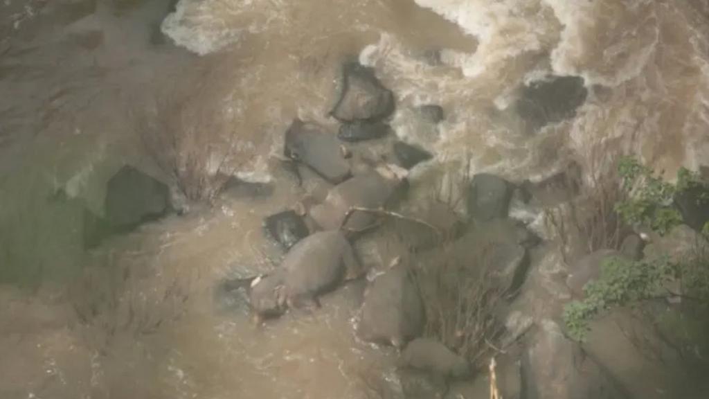 泰國小象不慎墮瀑布 5隻大象見同伴有難奮身相救不果齊齊溺斃
