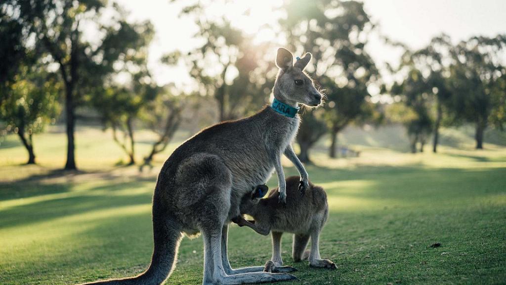 澳洲延長Working Holiday簽證至3年 在郊區工作及住滿3年可申請永久居留權