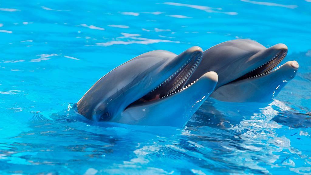 喚起社會大眾對鯨豚保育重視 全球知名旅遊網站宣布停售鯨豚類景點門票