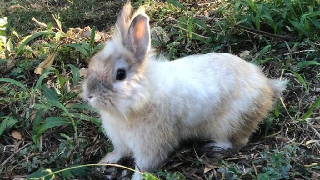 多隻寵物兔被棄於公園致一死兩傷 兔義工強調兔仔無法野外求生籲勿亂棄養