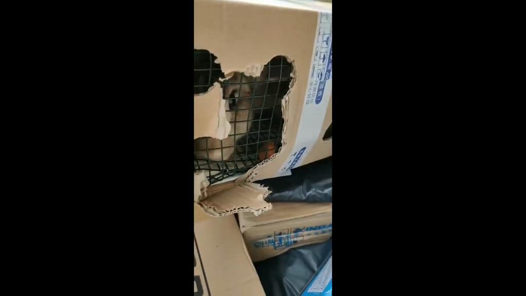 網購活兔後寄到內地集運倉 香港集運公司暫代為收養籲勿寄動物
