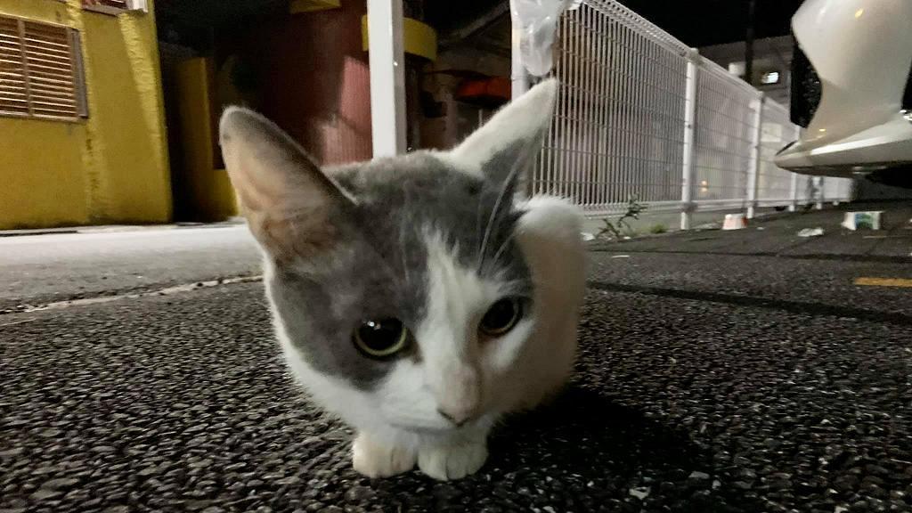 香港情侶重遊沖繩再遇粘人病危貓 不忍貓咪病重願一力承擔領養流浪貓回港