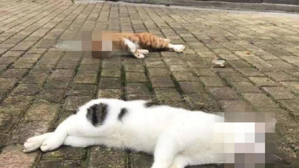 【新冠肺炎】誤傳寵物會感染武漢肺炎 狠心主人擔心被傳染將貓扔落街慘死