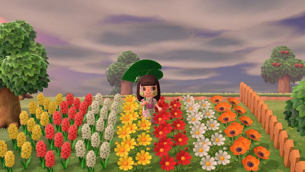 【動物之森/動物森友會】攻略配種異色花教學!金玫瑰/藍玫瑰特殊花種植方法