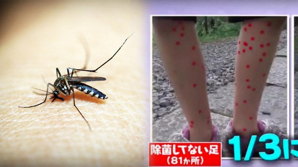 夏天做足防蚊措施都比蚊咬?日本節目教你一招減低被蚊咬機會