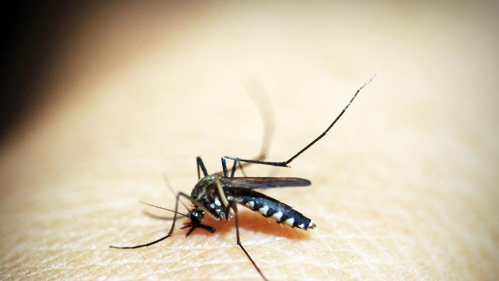 【新冠肺炎】被蚊咬會感染新冠肺炎病毒?美國研究蚊傳播病毒結果公開