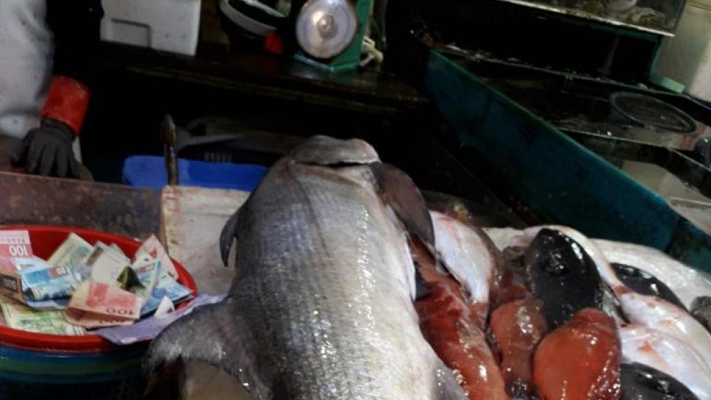 大埔街市魚檔21斤馬友索價一萬 街坊唔明點解咁貴 海鮮專家解釋原因:呢個價好合理