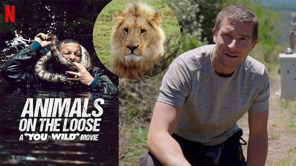 【野外求生預埋你:動物狂奔】Netflix互動式荒野求生節目 追蹤逃脫猛獸操控貝爺Bear Grylls命運