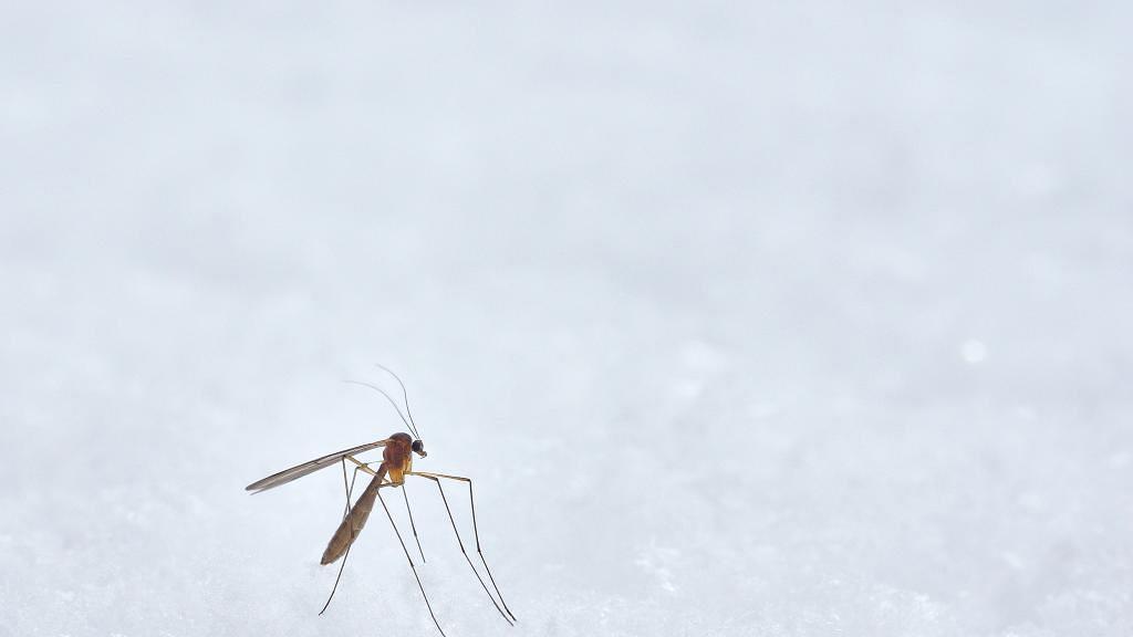 容易被蚊叮蟲咬可能唔關血型事!台灣研究揭開有一類人最易成為蚊子最愛