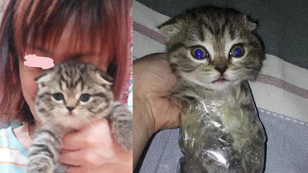 港女疑虐貓用透明膠紙綁住隻貓惹眾怒 嫌貓BB唔肯攬住瞓:唯有攞膠紙綁住佢