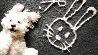 無用狗毛變賣萌神器 狗主創意砌出經典遊戲圖案