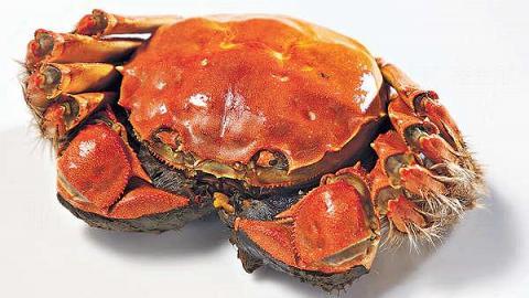 多吃大閘蟹 恐致敏爆哮喘
