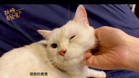 一出手貓咪即融化痴實你 教你5招摸貓絕技