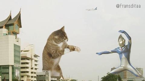 貓星人化身怪獸侵略地球 同超人對打超搞鬼