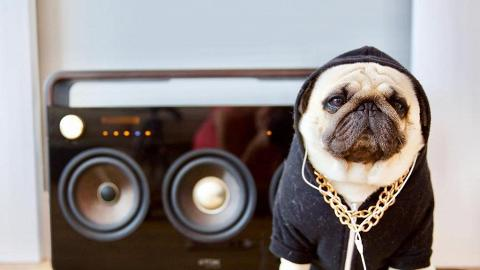 呆樣八哥做潮童 戴帽型爆做Hip Hop友
