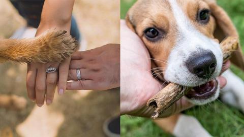 狗仔愛聽低能TONE!? 研究:用BB仔聲傾計可增進人狗感情