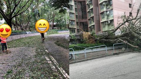 【颱風山竹】滿地塌樹面目瘡痍 市民自發清理路面充滿人情味
