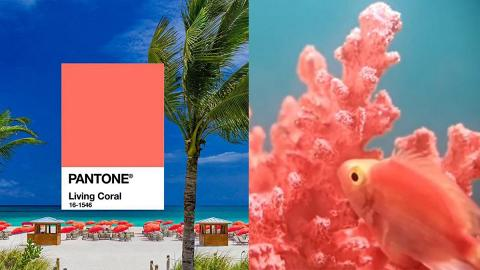 Pantone 2019年度顏色出爐!「活力珊瑚橘」象徵自然生命力