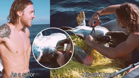 剪去尼龍繩助4隻被垃圾纏繞海龜重獲自由 暖男水手:這是我的責任!