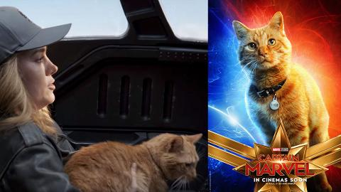 【Marvel隊長】比Captain Marvel更搶鏡!黃色萌貓Goose的幕後7件事