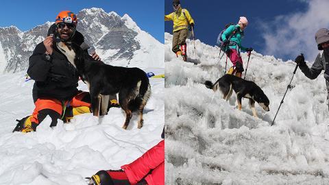 靈性流浪狗隨登山隊闖高峰!成功登上海拔7千米喜馬拉山刷新記錄