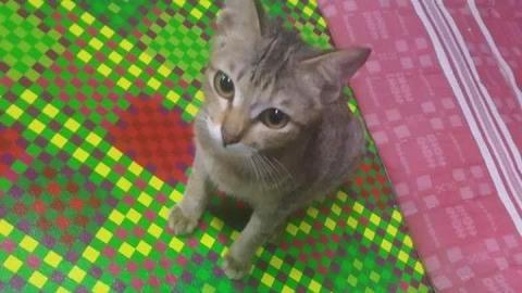 貓咪咬爛主人耳機線被痛鬧 轉頭竟送上小蛇賠罪求原諒