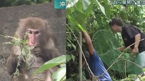 日本動物園猴子偷職員鎖匙偷走 出動近百人搜索終全數尋回
