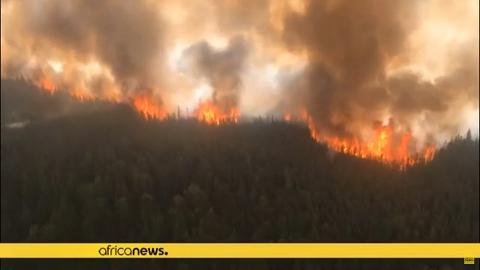 世界第二大熱帶雨林剛果盆地發生過萬宗火災 比亞馬遜大火數目高出5倍