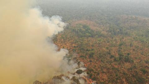 亞馬遜森林大火影響全球生態氣候!H&M/Vans多個品牌停止採購巴西皮革免成幫凶