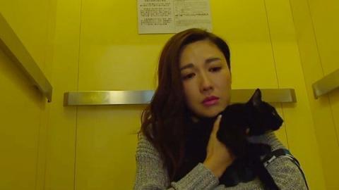 【金宵大廈】黑貓「靚寶」識走位勁搶鏡 陳山聰本來怕貓都被收服