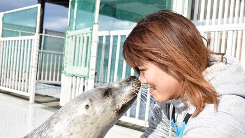 日本肥海豹被飼養員雙手按摩超享受 流露爽爆麻甩樣網民大讚好治癒