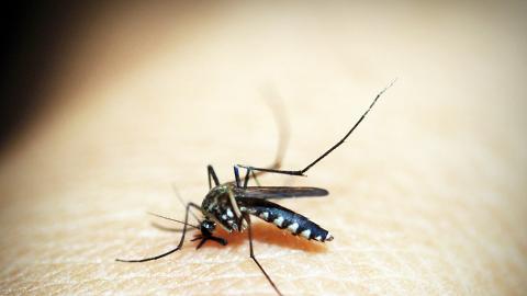 男子放屁6米內蚊蟲即死 臭屁變神技獲滅蟲公司高薪聘請